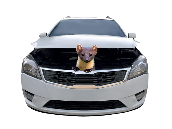 Pojištění při poškození měkkých částí vozidla zvířetem